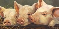 Pig Heaven Fine-Art Print