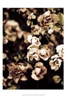Romantic Roses I Fine-Art Print