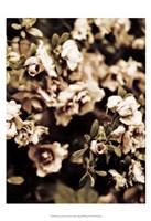 Romantic Roses II Fine-Art Print