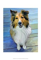 Sheltie the Eyes Have it Fine-Art Print