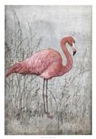 American Flamingo I Fine-Art Print