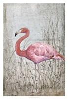 American Flamingo II Framed Print