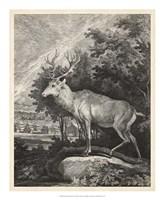 Woodland Deer II Fine-Art Print
