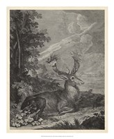 Woodland Deer III Fine-Art Print
