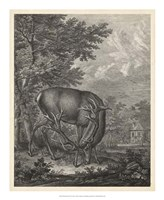 Woodland Deer IV Fine-Art Print