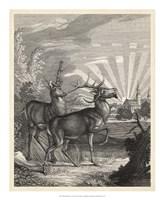 Woodland Deer V Fine-Art Print