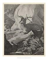 Woodland Deer VIII Fine-Art Print