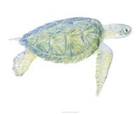 Tranquil Sea Turtle I Fine-Art Print