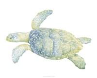 Tranquil Sea Turtle II Fine-Art Print