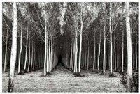 Alley At Lac D'uby Fine-Art Print
