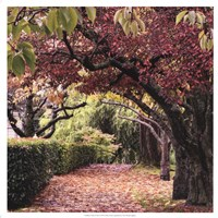 Arch of Trees Fine-Art Print