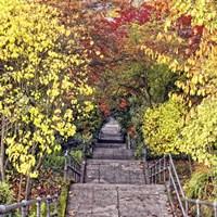 Autumn Tunnel Fine-Art Print