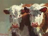 Cow Belles Fine-Art Print