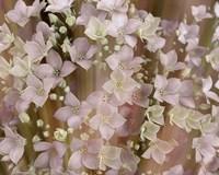 Soft Floral II Fine-Art Print