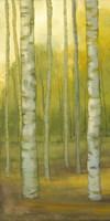 Sunny Birch Grove I Fine-Art Print