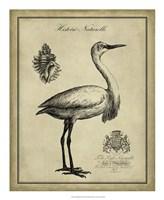 Antiquarian Egret Fine-Art Print