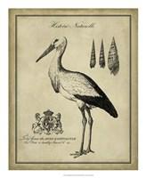 Antiquarian Stork Fine-Art Print