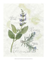 Rosemary & Sage Fine-Art Print