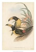 Tropical Toucans IV Fine-Art Print