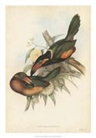 Tropical Toucans V Fine-Art Print