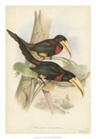 Tropical Toucans VII Fine-Art Print