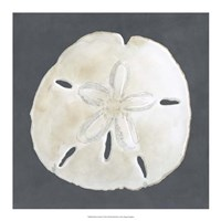 Shell on Slate II Fine-Art Print