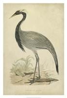 Morris Crane II Fine-Art Print