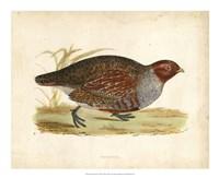 Morris Pheasants I Fine-Art Print