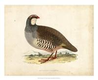 Morris Pheasants II Fine-Art Print