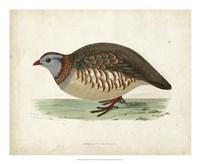Morris Pheasants III Fine-Art Print