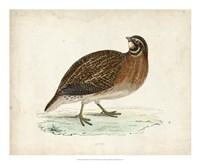 Morris Pheasants IV Fine-Art Print