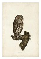 Little Owl Fine-Art Print