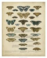 Tabula de Papilio Fine-Art Print