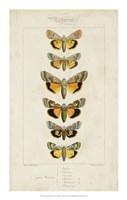 Pauquet Butterflies I Fine-Art Print