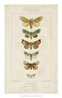 Pauquet Butterflies II Fine-Art Print