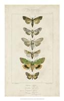 Pauquet Butterflies III Fine-Art Print