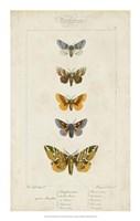 Pauquet Butterflies IV Fine-Art Print