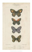Pauquet Butterflies V Fine-Art Print
