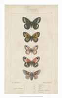 Pauquet Butterflies VI Fine-Art Print