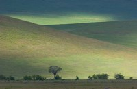 Panoramic view of hill, Ngorongoro Crater, Arusha Region, Tanzania Fine-Art Print
