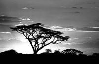 Silhouette of Trees in Black and White, Ngorongoro Conservation Area, Arusha Region, Tanzania Fine-Art Print