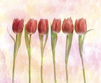 Six pink tulips with green stems and leaves upright in front of pink plaster wall Fine-Art Print