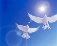 Two doves side by side with wings outstretched in flight with brilliant light and blue sky Fine-Art Print