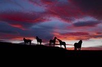 Silhouette of horses at night, Iceland Fine-Art Print
