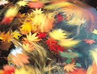 Maple Leaves, Blurred Motion Fine-Art Print