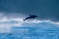 Common dolphin breaching in the sea Fine-Art Print