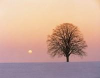 Sunset view of single bare tree Fine-Art Print