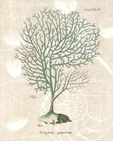 Gorgonia Granulata on Linen Sea Foam Fine-Art Print