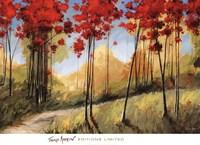 Forest Trail Fine-Art Print