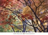 Lithia Park Fall 3 Fine-Art Print
